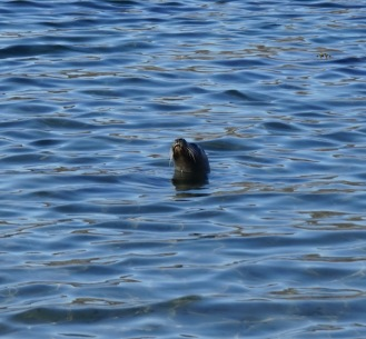 seal floating
